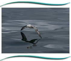 Moray Firth Wildlife Marine Tours
